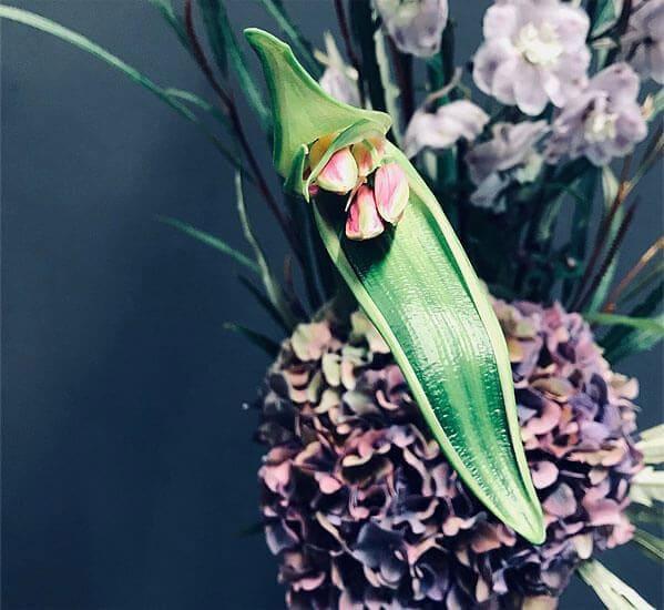 Eine Blume der Gattung Costus