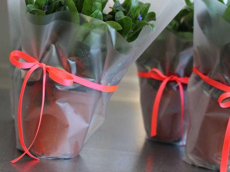 B2B Blumen - Florale Post!